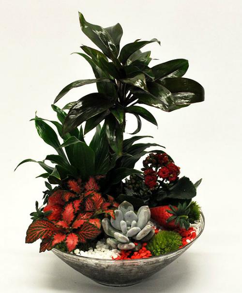 plantes. Black Bedroom Furniture Sets. Home Design Ideas