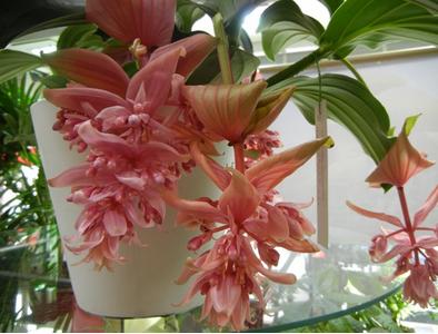 Plante Interieure Fleurie Journalphoto